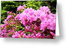 Pink Azalea Flowers Landscape 11 Art Prints Canvas Artwork Framed Art Cards Greeting Card