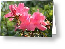 Pink Azaleas Greeting Card
