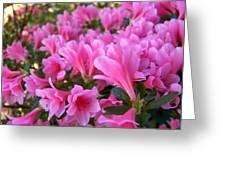 Pink Azaleas II Greeting Card