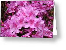Pink Azaleas Summer Garden 6 Azalea Flowers Giclee Art Prints Baslee Troutman Greeting Card