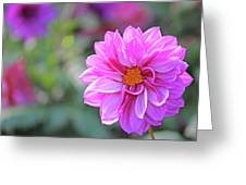 Pink Beauty Greeting Card by Becky Lodes