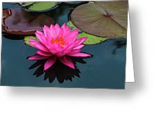Pink Beauty Greeting Card