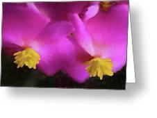 Pink Begonia In San Diego Greeting Card
