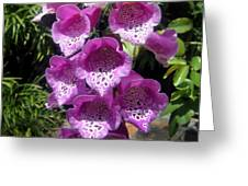 Pink Bell Flowers, Close-up. Foxglove 02 Greeting Card