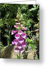 Pink Bell Flowers. Foxglove 03 Greeting Card