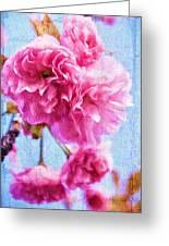 Pink Bellos Greeting Card