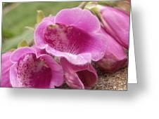 Pink Bells Greeting Card