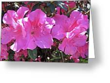 Pink Bevy Of Beauties Greeting Card