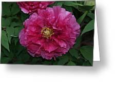 Pink Bloom Peony Tree Greeting Card