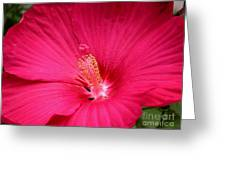 Pink Bloomers Greeting Card