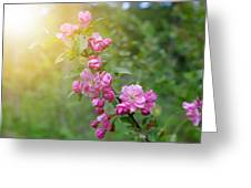 Pink Blossom Bokeh Greeting Card