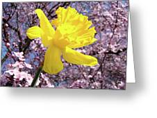 Pink Blossom Spring Trees Yellow Daffodil Flower Baslee Troutman Greeting Card