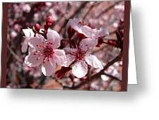 Pink Blossoms 033014c Greeting Card