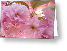 Pink Blossoms Art Prints Spring Tree Blossoms Baslee Troutman Greeting Card