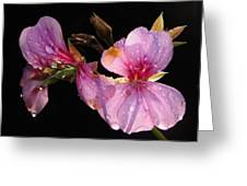 Pink Blush Cranesbill Greeting Card