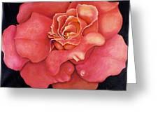 Pink Blush Greeting Card