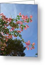 Pink Bougainvillea Greeting Card