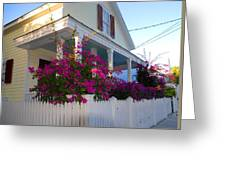 Pink Bougainvilleas Greeting Card