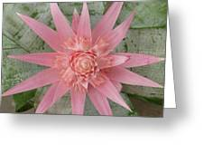 Pink Bromeliad Greeting Card