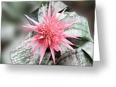 Pink Bromeliad Greeting Card