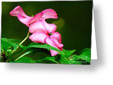 Pink Busy Lizzies Greeting Card