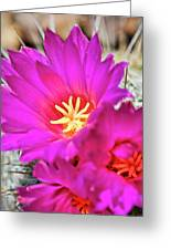 Pink Cacti Flowers Greeting Card