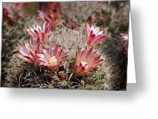 Pink Cactus Flowers 2 Greeting Card