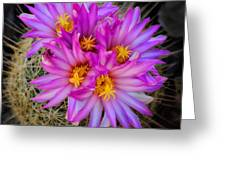 Pink Cactus Flowers Square  Greeting Card