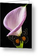 Pink Calla Lily With Butterfly Greeting Card