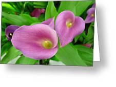 Pink Callas Greeting Card