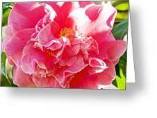Pink Camellia At Pilgrim Place In Claremont-california  Greeting Card