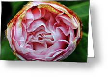 Pink Camellia Bud Greeting Card