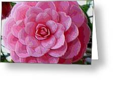 Pink Camellia Dream  Greeting Card