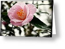 Pink Camellia With Raindrops Greeting Card by Eva Thomas