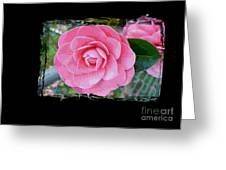 Pink Camellias With Fence And Framing Greeting Card
