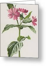 Pink Campion Greeting Card