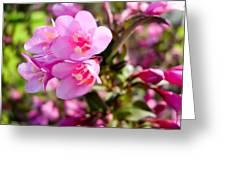 Pink Cardinal Bush Flowers Greeting Card