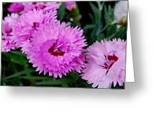 Pink Carnation Cluster Greeting Card