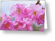 Pink Cherry Blossom Cluster Greeting Card