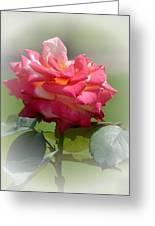 Pink Chiffon Ruffles Greeting Card