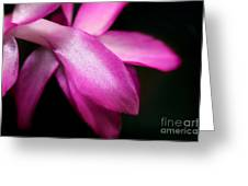 Pink Christmas Cactus Greeting Card