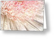 Pink Chrysanthemum With Antique Distress Greeting Card