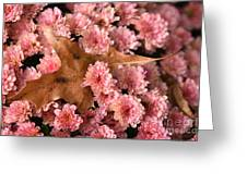 Pink Chrysanthemums With Pin Oak Leaf Greeting Card
