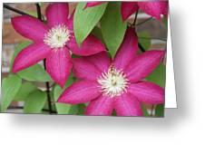 Pink Clematis 2 Greeting Card