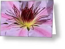 Pink Clematis Closeup Greeting Card