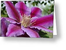 Pink Clematis Vine Greeting Card
