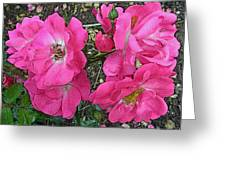 Pink Climbing Roses - Digitally Enhanced Greeting Card