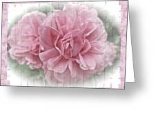 Pink Climbing Roses Greeting Card