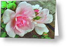 Pink Cluster Of Roses Greeting Card