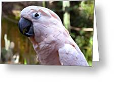 Pink Cockatoo Greeting Card